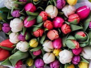 Visit the Harrogate Flower Show on Saturday 22nd April 2017